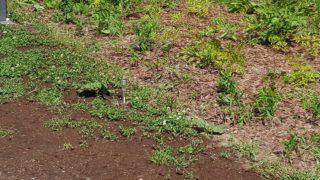 Восстановление газона
