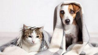 Кот и пес под одеялом. Холодно в квартире.